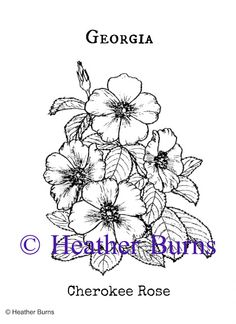 Georgia State Flower Coloring The state of Georgia picked the Cherokee Rose as their State Flower. Thigh Piece Tattoos, Pieces Tattoo, Future Tattoos, New Tattoos, Tatoos, Cherokee Rose, Cherokee Nation, Georgia Flower, Georgia Tattoo
