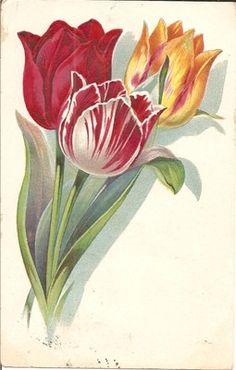 1910 Postcard of Lovely Tulips - Flower Series