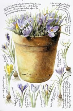 Plant bulbs in pots every October to enjoy in Spring~ Marjolein Bastin