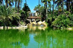 Un paseo en el Parque El Palmeral de Alicante