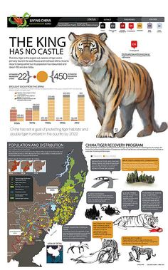 Tigers in China (INFOGRAPHIC)