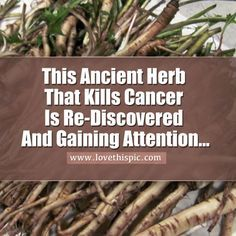 Ancient herb kills cancer is being repopularized.