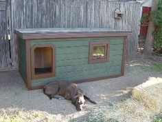 Lizzie - Colorado:  several years of being tried and tested, this dog house has been proven to be the most comfortable and the safest home you can build for your beloved dog.