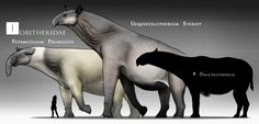 The Largest denizens of Fantasia, one of the three hearts in the Eurasian Interior. These giant beasts descend from Indricotheres, and are very similar to them in many ways. Fantasia is mostly made...