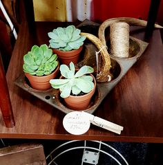 The Junkery - Succulents - Antlers
