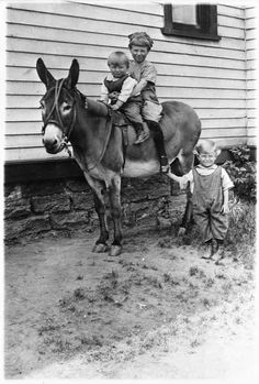 Curtis, Merle and Keith Murphey with donkey, Minneapolis. Creator: Minnesota Historical Society, Photo Lab. Content: 05/1922. Courtesy: © Minnesota Historical Society, St. Paul, MN (USA).
