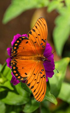 Dominance: the bright orange butterfly draws the viewers attention to it.