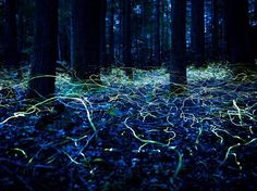 This is what a long exposure photo of fireflies looks like.