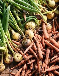 sadonkorjuu Fall Photos, Green Beans, Photo Shoot, Autumn, Vegetables, Food, Fall Cover Photos, Fall, Fall Season Pictures