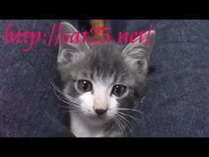 kitten videos,Cats and kittens 子猫動画&猫画像♪猫ニャーゴyoutube
