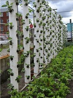 Strawberry towers (pic only) (not a fan of plastic in gardening [bpa and all] but if you don't mind it this is a great solution to small area gardening!