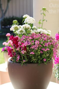 to Plant Hanging Baskets HGTV Gardens recommends these beautifully draping flowers and plants for your hanging baskets and containers.HGTV Gardens recommends these beautifully draping flowers and plants for your hanging baskets and containers. Container Flowers, Container Plants, Container Gardening, Plant Containers, Garden Pictures, Plant Pictures, Cheap Raised Garden Beds, Raised Beds, Garden Pests