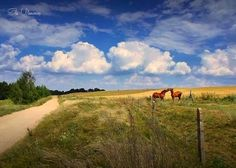 Region of Mazury, north-eastern Poland. Hotels, Seen, Wellness, Poland, Old Things, Country Roads, Outdoor, Bike Rides, Country