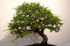 How to Care for a Bonsai Tree | Garden Guides