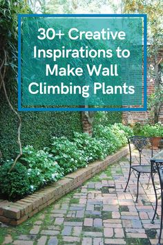 30+ Creative Inspirations to Make Wall Climbing Plants on Your Backyards Home #plantsbackyardshome Wall Climbing Plants, Backyards, Creative Inspiration, Garden Landscaping, Landscape, How To Make, Scenery, Backyard, Landscape Paintings