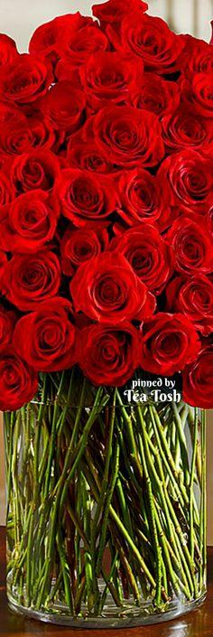 ❇Téa Tosh❇ 100 long stem roses