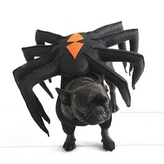 Martha's beloved French bulldogs are all dressed up for Halloween, too. Francesca, disguised as a devious black widow spider, is out to catch the little moth Sharkey in her web!