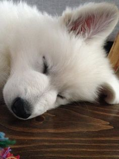 Sleep is very important. #dog #puppy #cute #pets #adorable