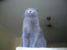 .oo. .F.E.L.I.N.U.S. .oo. Para gente que gosta de gatos e não só...