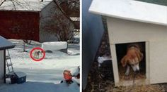 Dog Left Outside For Years Gets Her First House