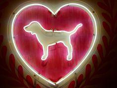 Pink Puppy! #lovePINK #PINKreps #VSPINK