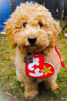 57 Dog Costumes That Get Your Pup In On the Halloween Fun Beanie Baby Dog Halloween Costume<br> Just wait until you see the 'Star Wars' options. Big Dog Halloween Costumes, Cute Dog Costumes, Halloween Fun, Costume Ideas, Small Dog Costumes, Woman Costumes, Couple Costumes, Group Costumes, Couple Halloween