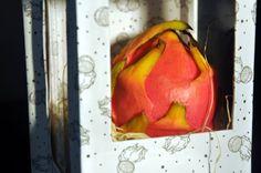 Cindy Evelin: Dragon Fruit