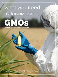What You Need To Know About GMOs | holistichealthnaturally.com