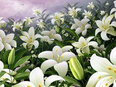 květiny obrázky, lilie tapety, bud vektor, obloha fotky, louka zázemím, tyčinek materiál