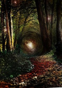 ✯ Maybe Alice's real life rabbit hole inspiration? • Enchanted Forest, RobIreland - Ireland