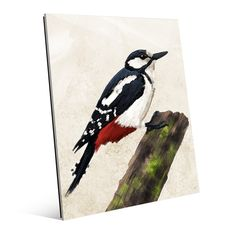 Horizon Painted Great Spotted Woodpecker Glass Wall Art