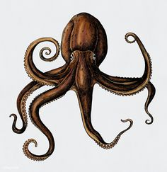 Hand drawn octopus isolated | free image by rawpixel.com