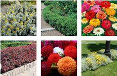 Come realizzare un #ortogiardino: dove la bontà degli #ortaggi si sposa con la bellezza dei fiori!