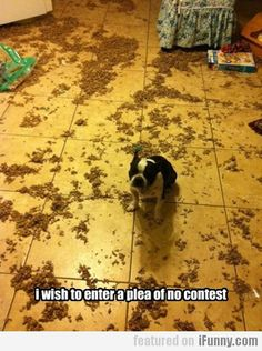 I Wish To Enter A Plea Of No Contest
