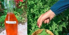 Vyskúšajte tento recept na zázračný sirup z medovky: Dajte si ho pred spaním do čaju a v noci sa nebudete budiť!   Báječné Ženy Korn, Hot Sauce Bottles, Carrots, Alcoholic Drinks, Ale, Food And Drink, Vegetables, Health, Glass