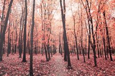 Pink Autumn by Alexei Scutari  on We Heart It