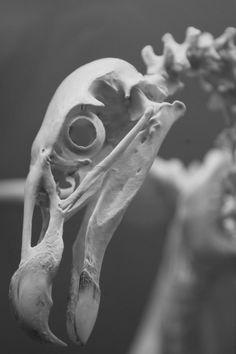 www.dharmaanchor.com --- Oklahoma City Museum of Osteology - Science Bones Skeleton Zoology Anatomy