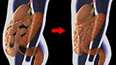 The colon is one of the most important organs in the body because it regulates the immune system, aids the digestion process, and maintains water balance in the body. Therefore, when the colon isn't functioning 100%, toxic waste begins piling up in the body, instead of being disposed adequately.Continue Reading   TwitterFacebookGoogle+PinterestLinkedinEmail