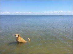 Urlaub auf vier Pforten - Sylter Hundetage (rf) Sylt ist auf den Hund gekommen! Anfang November finden auf der Insel die 1. Sylter Hundetage statt. Im Zeitraum November bis Februar ist zudem der Aufenthalt für Hunde am Strand ... Mehr: http://www.reisefernsehen.com/reise-news/reise-news-urlaub-ganz-nah/387115a2580a87e08-urlaub-auf-vier-pforten-sylter-hundetage.php