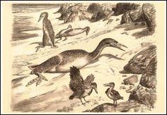 Ichthyornis | Zdeněk Burian (1905-1981) | Prehistoric Animals (1960)
