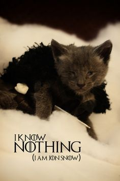 Cat Cosplay: Star Wars, Game of Thrones, Doctor Who & More! Dessin Game Of Thrones, Hbo Game Of Thrones, Kittens Cutest, Cats And Kittens, Cute Cats, Cat Fun, Crazy Cat Lady, Crazy Cats, Kittens In Costumes