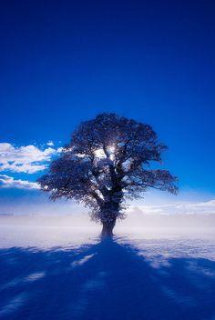 llbwwb:  Brisk Winter Day-Virginia by Marc Melander