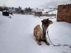 Voor het eerst sneeuw in Egypte sinds 117 jaar.