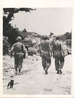"""1945- """"Captured"""" by U.S. Marines when the Japanese left town, this tiny mascot follows troops through war-torn street in Itowan on Okinawa."""