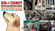 Petition · Please Shut Down The Yulin Dog Meat Festival · Change.org