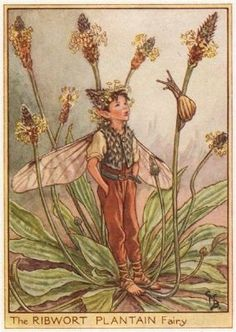 """Ribwort Plantain Fairy by Cicely Mary Barker. Wayside Flower Fairies, c1948  This is an original vintage Cicely Mary Barker Flower fairies colour print. It is not a modern reproduction. """"Flower Fairies of the Wayside""""; Poems and Pictures by Cicely M. Barker, Published by Blackie & Son Limited, London."""