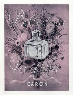 Caron, 1934 - Bellodgia