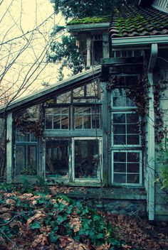 Abandoned and derelict greenhouse -This is still so beautiful. Abandoned Cities, Abandoned Mansions, Abandoned Houses, Old Houses, Abandoned Belgium, Old Windows, Recycled Windows, Reclaimed Windows, Vintage Windows