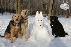 Life with Dogs and Cats Snow Art, Labrador Retriever, Dog Cat, Cats, Life, Animals, Labrador Retrievers, Gatos, Animales