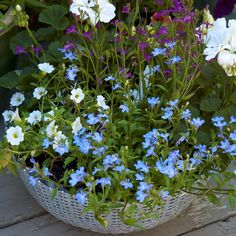 Container Garden | container gardening picture of flowering container garden in a metal ...